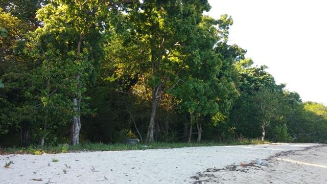 Pantai Bama, Taman Nasional Baluran