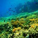 Wisata Taman Bawah Laut di Pulau Menjangan (Bali Barat)