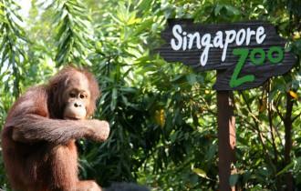 Wisata Kebun Binatang Singapore Zoo