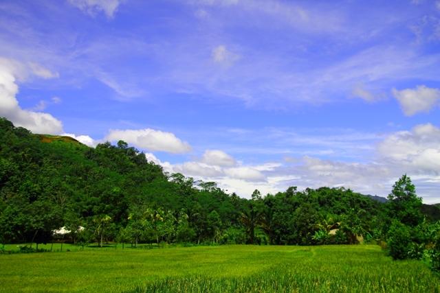 cuaca cerah dan hijaunya suasana