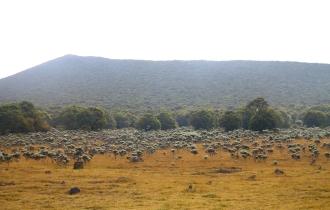Pendakian Seru Gunung Gede via Jalur Gunung Putri