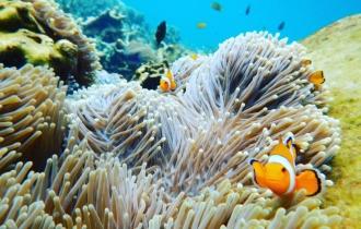 Aquarium Taman Bawah Laut Pahawang, Lampung